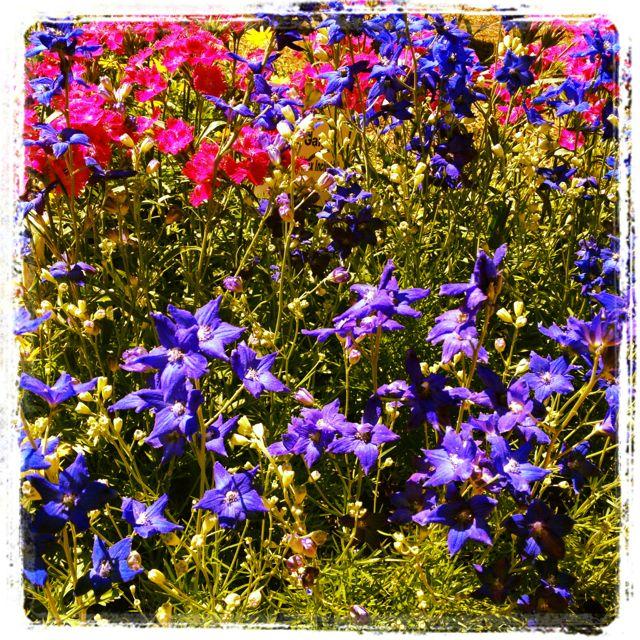 Wordless Wednesday: Leu Gardens