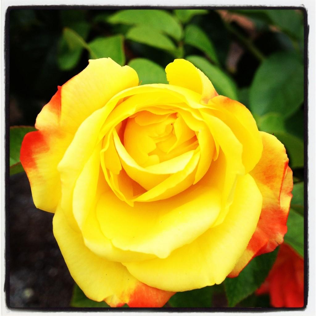 Wordless Wednesday: Leu Gardens Is So Beautiful