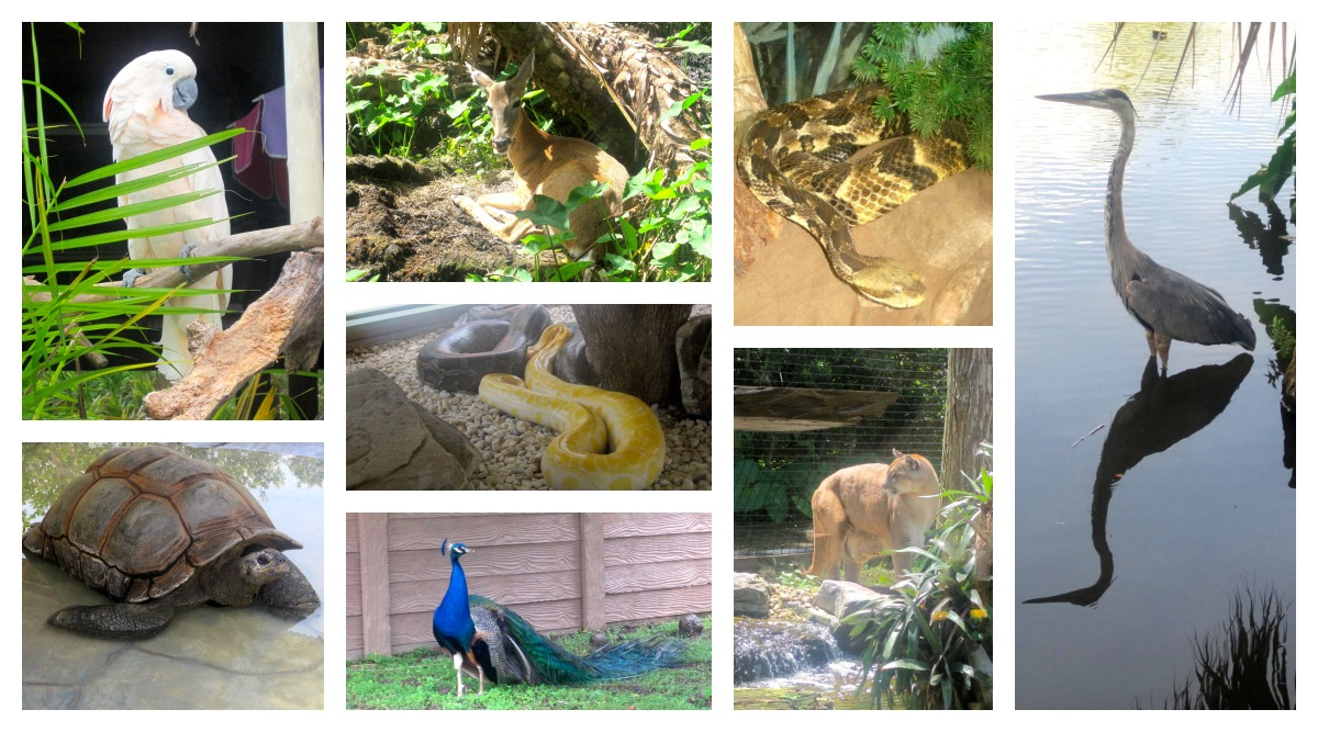 Animals at Gatorland