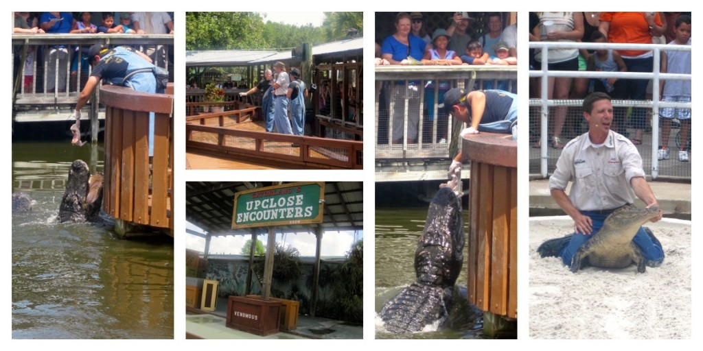 Florida Residents Save 50% Off Admission To Gatorland