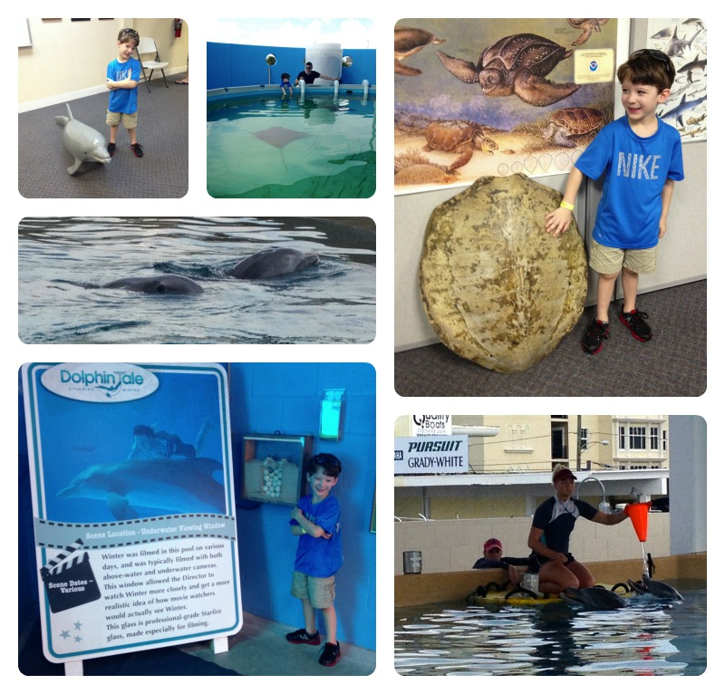 AquariumCollage.jpg