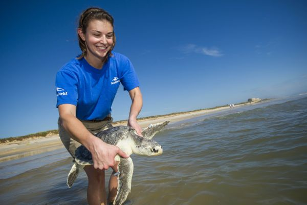 SeaWorld_Orlando_Returns_Kemp_s_Ridley_Sea_Turtle