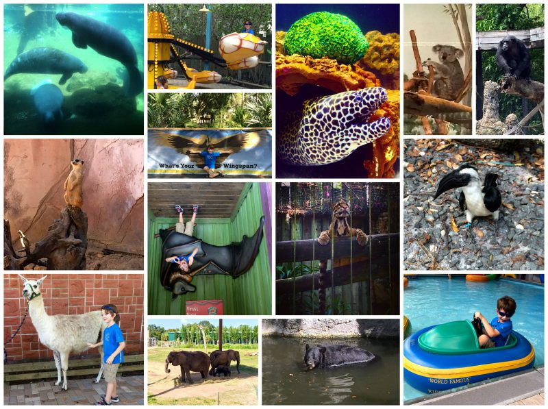 Pay For A Day, Come Back All Year To Tampa's Lowry Park Zoo