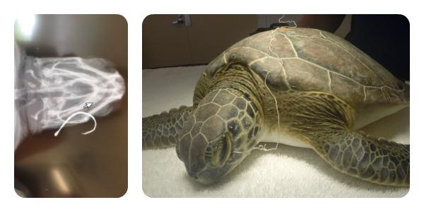 TurtleSW