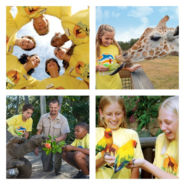Busch Gardens Day Camps