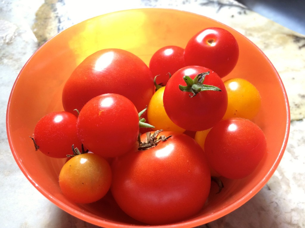 TomatoesFromGarden