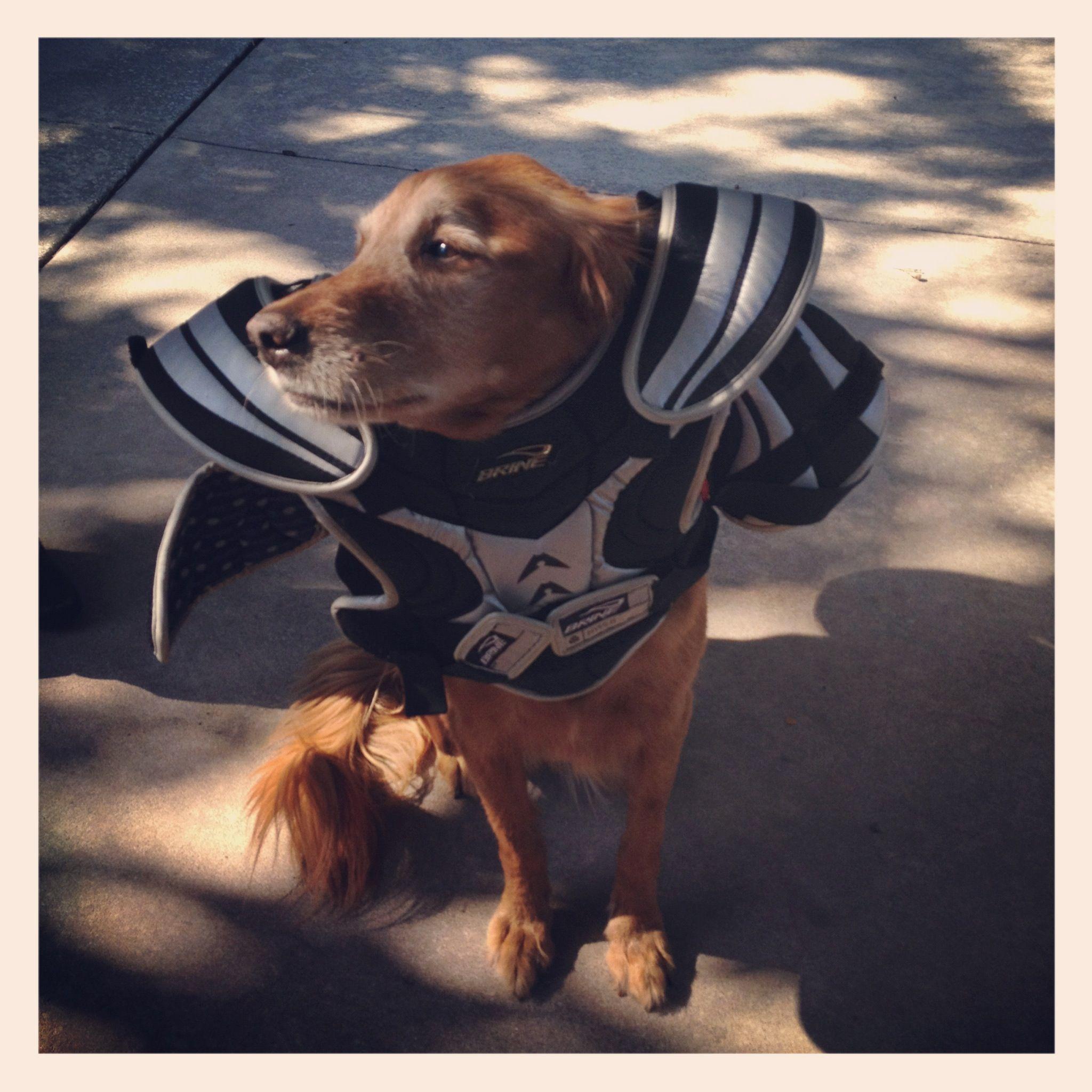 Wordless Wednesday: Super Dog