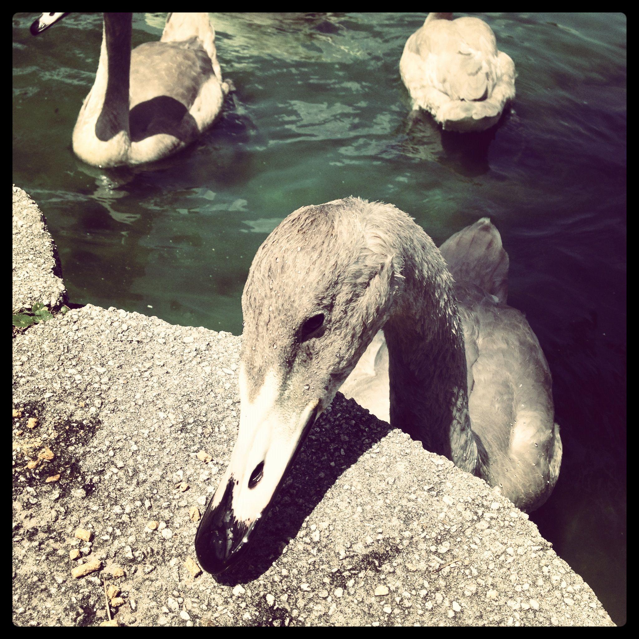 Wordless Wednesday: Lake Eola Fun