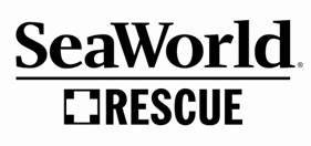 SeaWorld's Florida & Texas Rescue Teams Save Entangled Dolphin