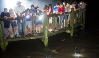 Beat The Heat And Experience Gator Night Shine At Gatorland